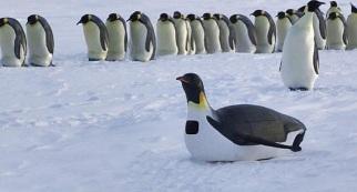 1682433-slide-slide-9-penguins-spy-in-the-huddle.900x600