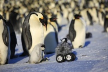 penguin1.900x600