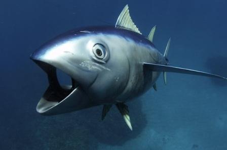 spy-tuna.900x600